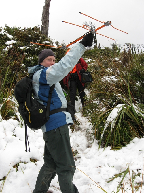Radio tracking kiwi with a VHF receiver and Yagi antenna in the snow during winter
