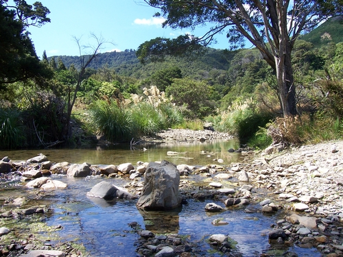 Catchpool Stream in high summer