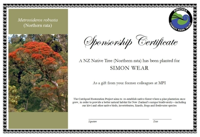 Sponsor a Tree Certificate example - (Northern rata)